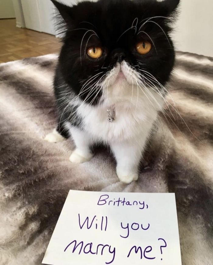 Wedding Proposal Ideas in First on our pet's instagram, then in person!