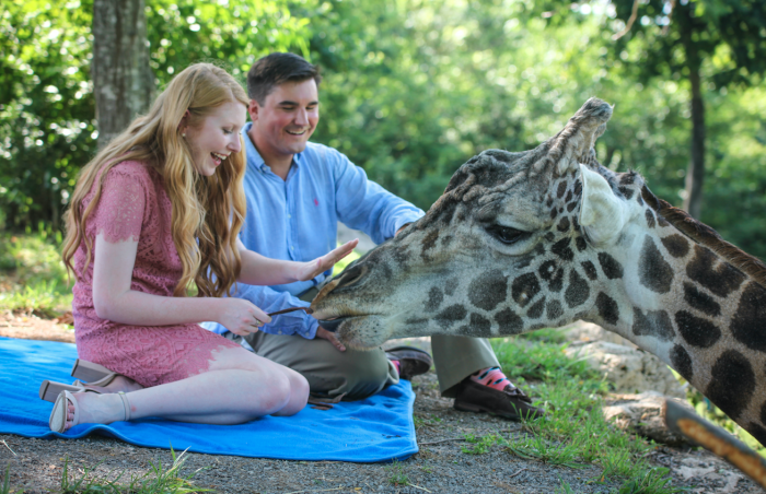 Where to Propose in Nashville Zoo