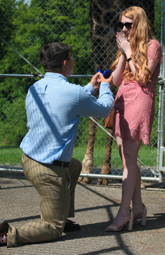 Paige's Proposal in Nashville Zoo