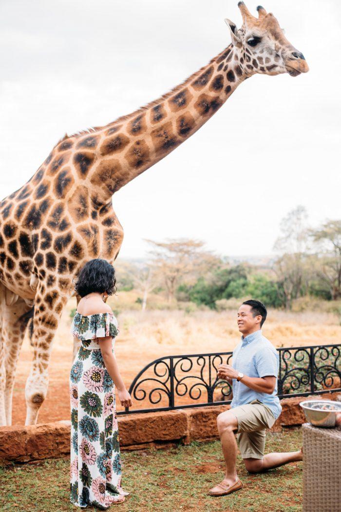 Engagement Proposal Ideas in Giraffe Manor in Kenya