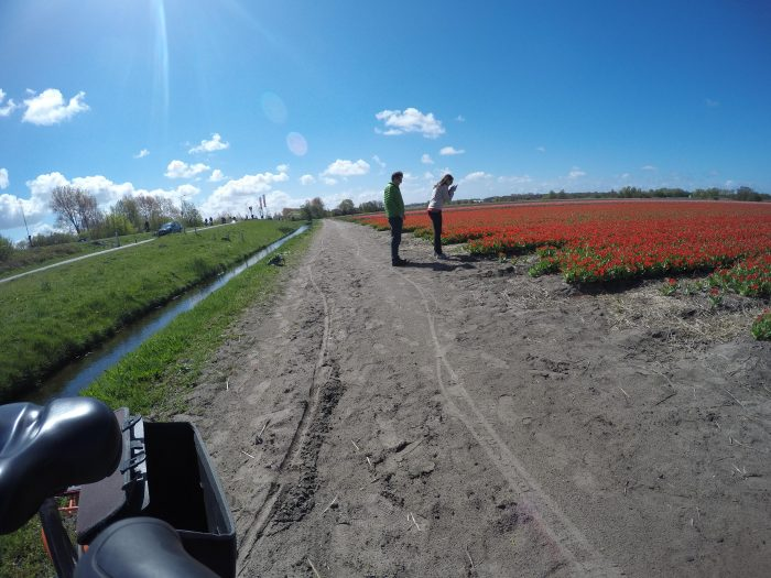 Marriage Proposal Ideas in Lisse, Netherlands