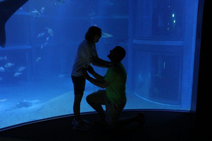 Wedding Proposal Ideas in Osaka Aquarium Kaiyukan
