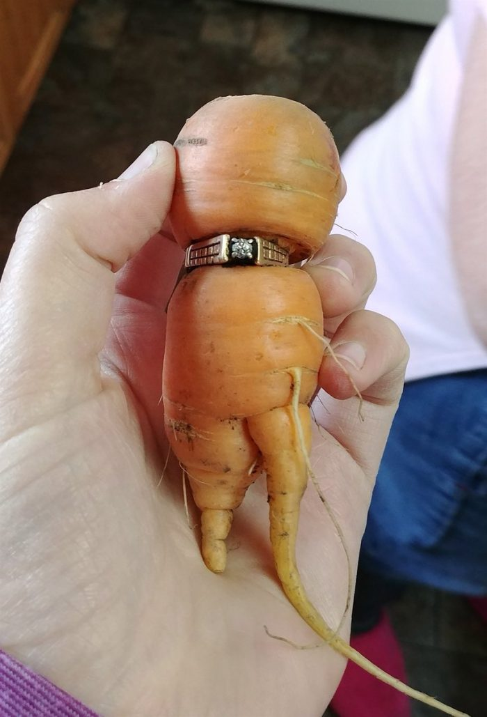 Image 3 of 13 Years Later, Woman Finds Lost Engagement Ring on Carrot