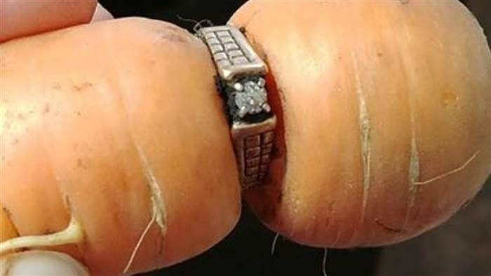 Image 4 of 13 Years Later, Woman Finds Lost Engagement Ring on Carrot