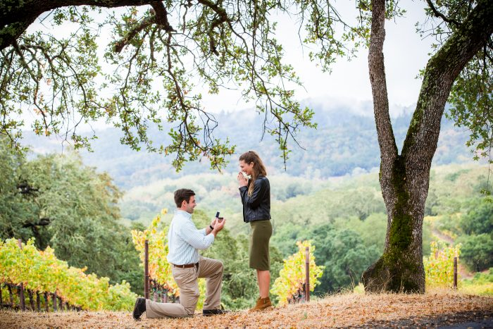 Where to Propose in Buehler Vineyards, Napa, California