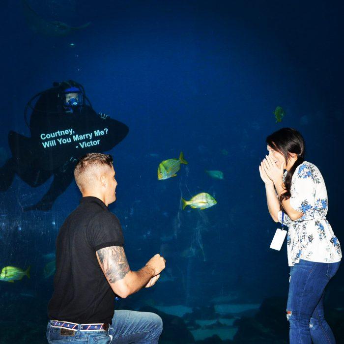 Courtney and Victor's Engagement in Georgia Aquarium