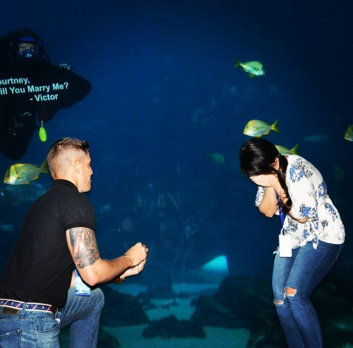 Wedding Proposal Ideas in Georgia Aquarium