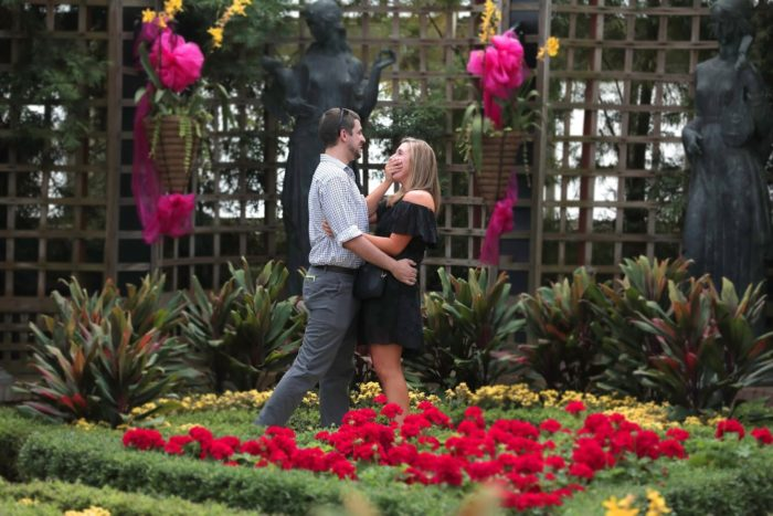 Marriage Proposal Ideas in Phipps Conservatory & Botanical Gardens, Pittsburgh, PA