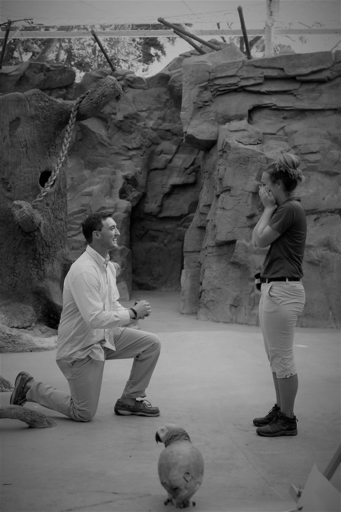 Marriage Proposal Ideas in My workplace, The Naples Zoo
