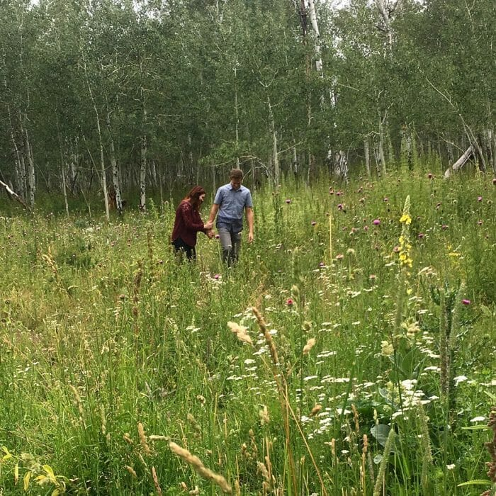 Proposal Ideas A meadow in the Uinta Mountains