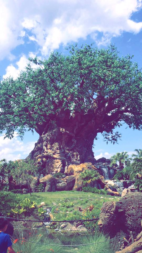 Where to Propose in Walt Disney World - Animal Kingdom