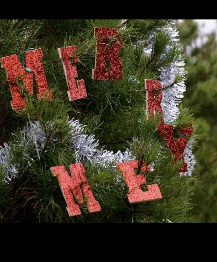 Wedding Proposal Ideas in Elgin Tree Farm