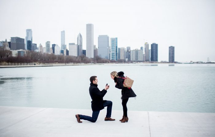 Proposal Ideas The Shedd Aquarium
