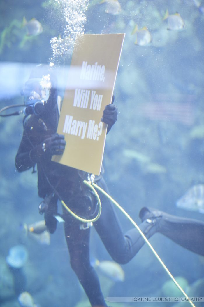 Engagement Proposal Ideas in Aquarium of the Pacific