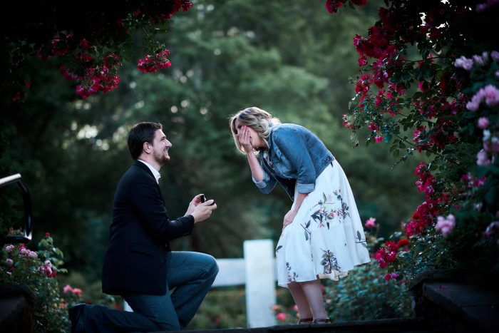 Taylor's Proposal in International Rose Test Garden in Portland, OR