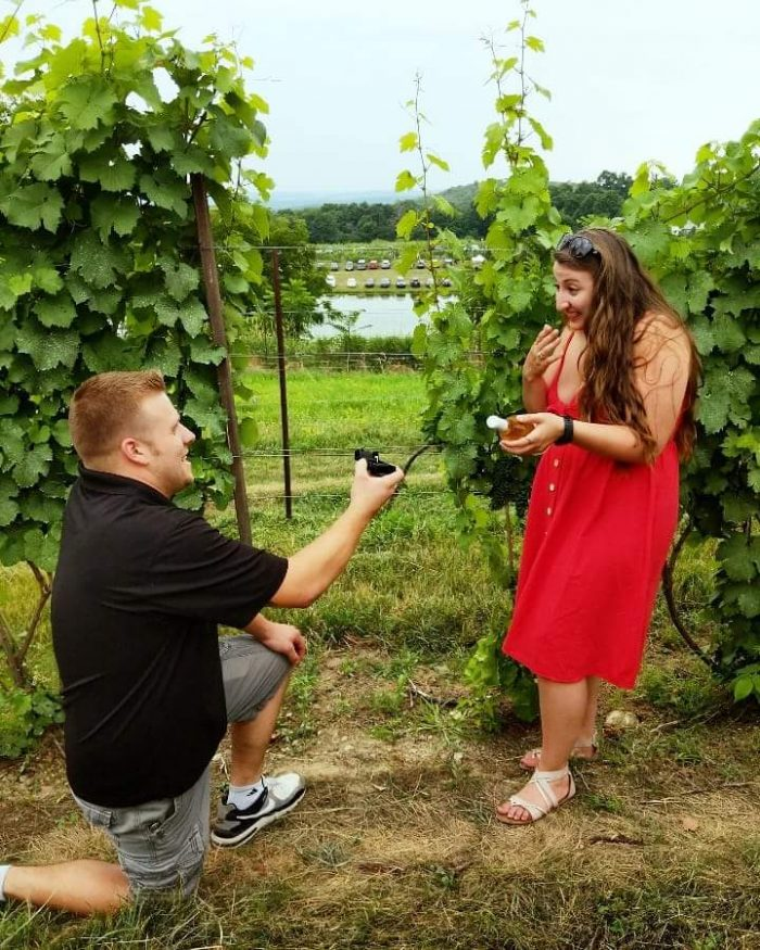 Engagement Proposal Ideas in Millbrook Vinyards and Winery