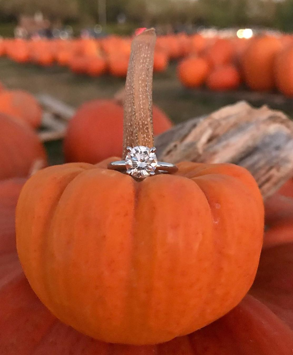 Image 2 of 10+ Amazing Thanksgiving Proposal Ideas