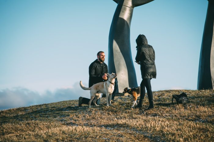 Wedding Proposal Ideas in The Whales Tales
