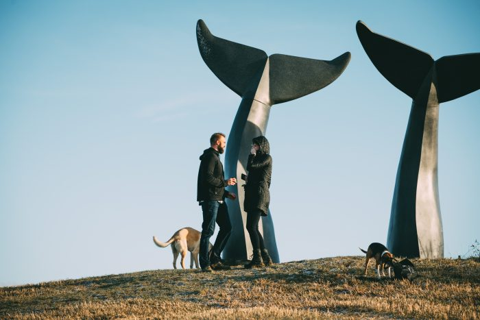 Jessica's Proposal in The Whales Tales