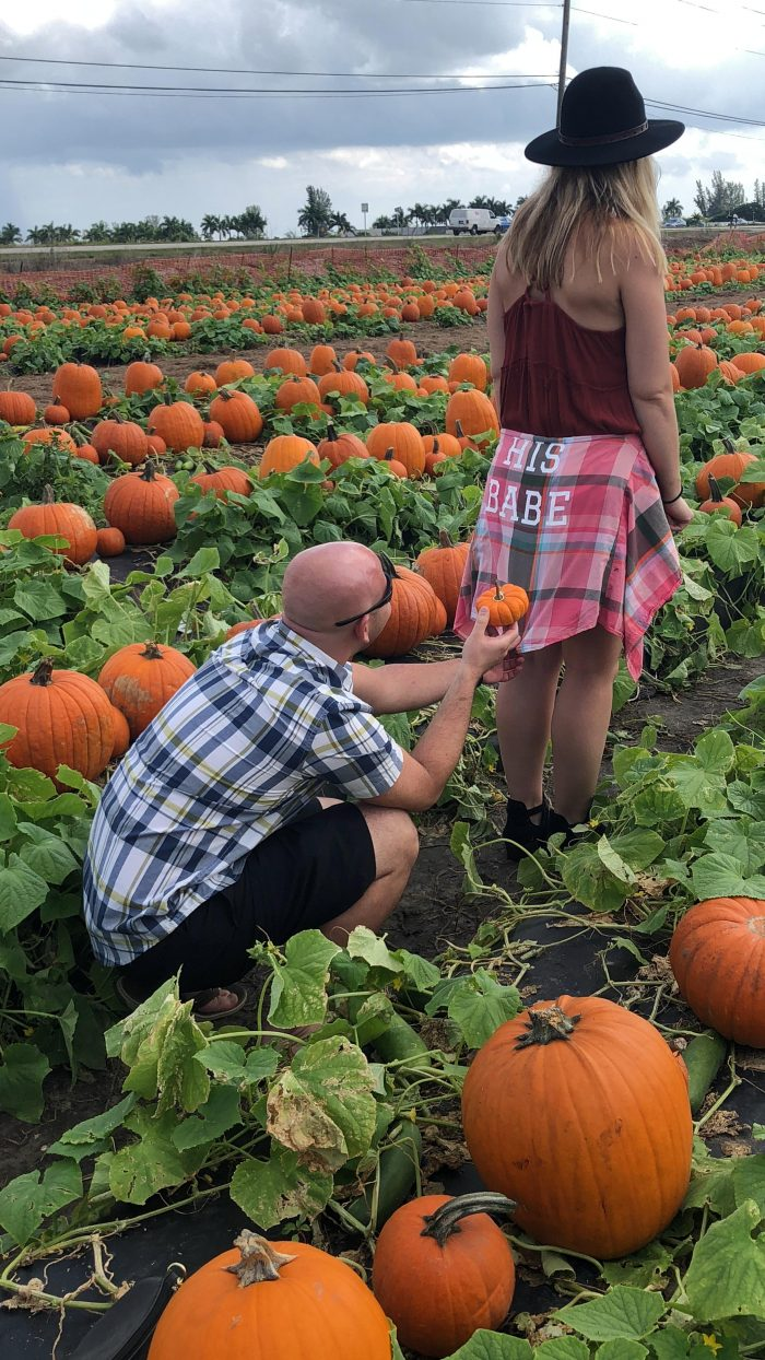 Proposal Ideas Bedner's Pumpkin Patch