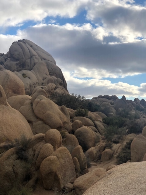 Bailey's Proposal in Joshua Tree National Park