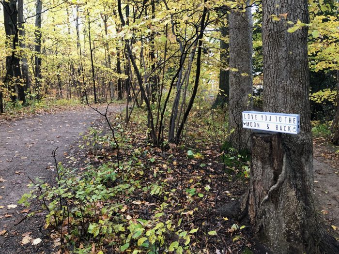 Marriage Proposal Ideas in Spencer Gorge Conservation Area
