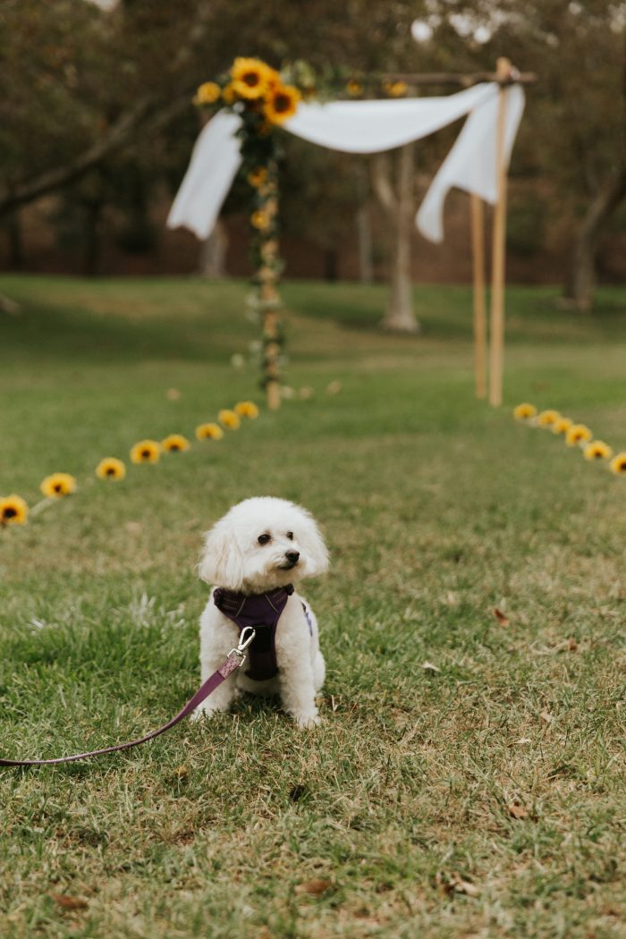 Wedding Proposal Ideas in Brace Canyon Park in Burbank, CA
