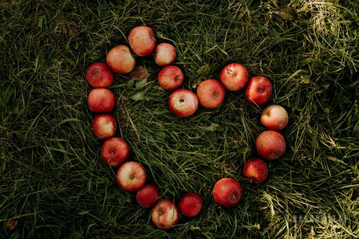 Engagement Proposal Ideas in Pine Tree Apple Orchard, Dellwood, MN
