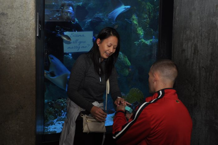Sirima's Proposal in New England Aquarium