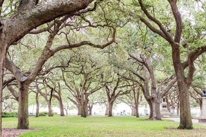 Wedding Proposal Ideas in Charleston, South Carolina