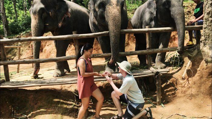Proposal Ideas Elephant Jungle Sanctuary in Phuket, Thailand