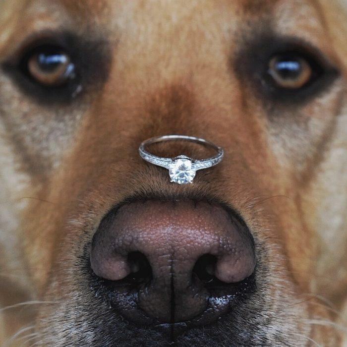 Wedding Proposal Ideas in Riverside Park, La Crosse WI