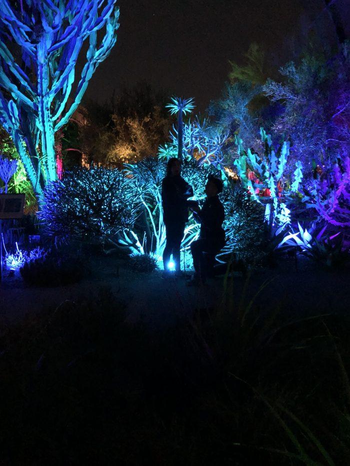 Marriage Proposal Ideas in Desert botanical gardens in Phoenix AZ