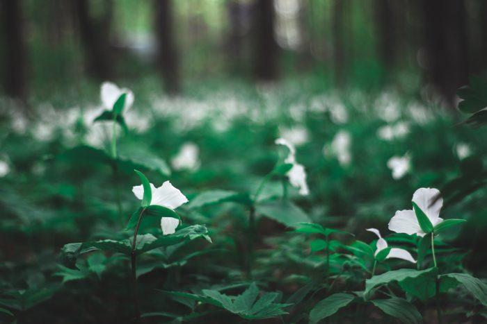 Proposal Ideas Sheppard's Bush Forest