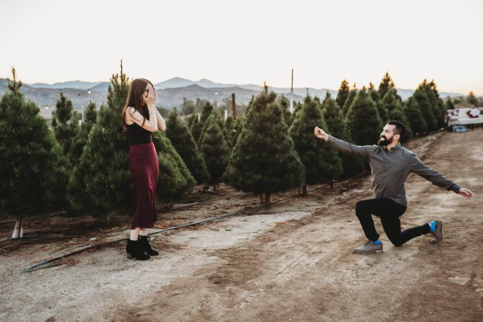 Katie's Proposal in Sand Haven Christmas Tree Farm in Perris, CA