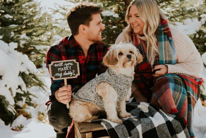 Braeden's Proposal in Private Christmas tree farm, Niagara Canada