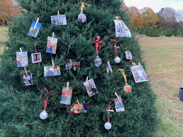 Marriage Proposal Ideas in Cobb's Choose and Cut Christmas Trees