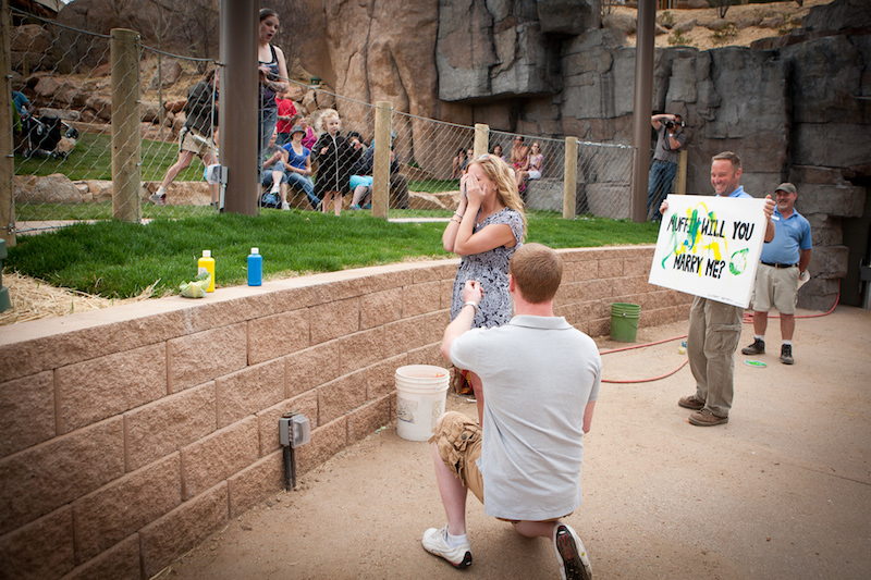 Caitlin and John Shane Co Zoo Proposal (4)