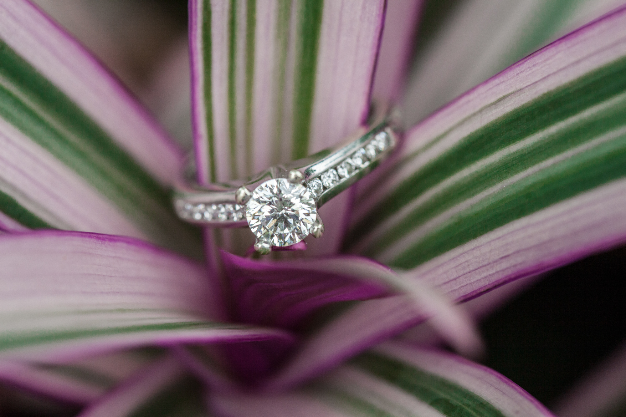 Amazing Engagement Ring Photos